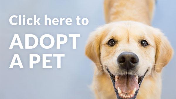 click to adopt a pet